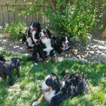 socialization with other dogs
