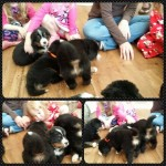 puppy socialization with litter J