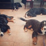 tired berners