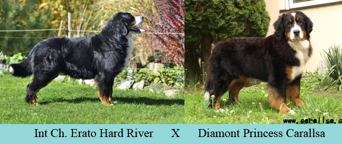 Jack's Sire and Dam